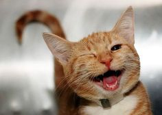 Happy kitty! The 30 Happiest Animals In The World That Will Make You Smile