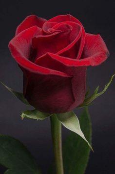 Per la meva estimadisima germana Rosita   epd  11/11/16.         jordi.