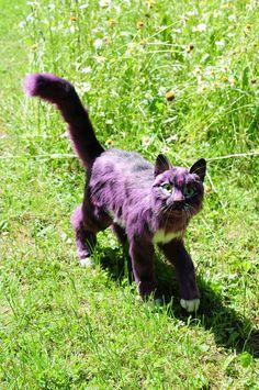 Bewegliche Künstlerpuppe, Katze, Violet von FellKunst auf Etsy