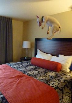 Puppy jumping on the bed