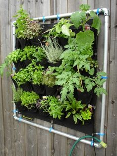 Vertical gardening on your wall or fence