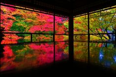 Beautiful Places In Japan, Colorful Trees, Kyoto, Autumn Leaves, Fields, The Good Place, Scenery, Art Gallery, Asia