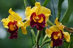 "Orchids in ""Burgers Bush"" by Foto Martien (thanks for over 3.000.000 views), via Flickr"