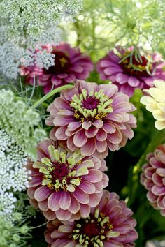 Zinnias are easy to grow and 2017 is the Year of the Zinnia. Here's our pick of the best cultivars to grow for long-lasting, colourful annuals.