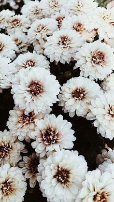 Flower Iphone Wallpaper, Sunflower Wallpaper, Iphone Background Wallpaper, Nature Wallpaper, Iphone Backgrounds, Nice Backgrounds, Vintage Flower Backgrounds, Background Images, White Flower Wallpaper