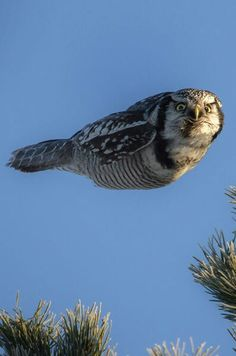 What?! Never seen an owl doing fish before?