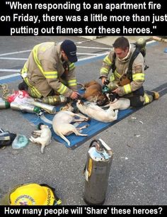 Firefighters refuse to give up on little dogs pulled from burning home! These are the true heroes! Cute Baby Animals, Animals And Pets, Pet Shop, Faith In Humanity Restored, Dressage, Mans Best Friend, Puppy Love, Animal Rescue, Animal Pictures