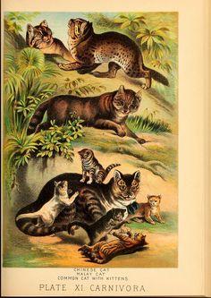 Johnson's household book of nature  New York,H.J.Johnson,[1880]  Biodiversitylibrary. Biodivlibrary. BHL. Biodiversity Heritage Library.