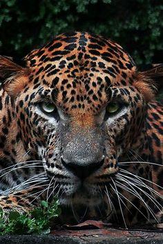 ~~Mr. Leopard by Prabu dennaga~~