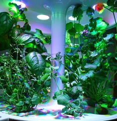 @lescherka Noo, hezky se nam to tady rozjelo🤗🌱🌱🌱@plantuicom#plantuismartgarden#growing#herbs#plantui#smartgarden#cooking#green#garden#smallgarden#corianderleaves#coriander#basil#zbytekmenezaaletakypestujem#krasastridanadheru#antistress#thinkgreen#nofilters How To Cook Greens, Growing Herbs, Green Garden, Instagram, The Green Garden