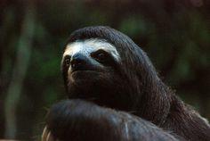 A Sloth Sanctuary in Ilhéus: Top Attractions on Bahia's Cocoa Coast