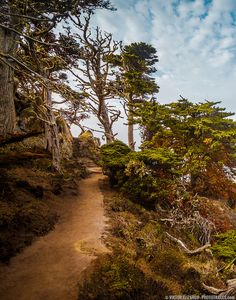 Hiking in the Magic Forest of Point Lobos (California) - by Viktor Elizarov from…