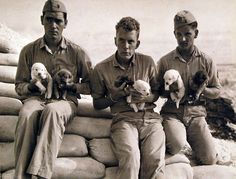 80-G-41867:  U.S. Marines at an outlying Pacific base with six pups which they will train for guard duty.  The Marine dog trainers are:  Private John C. Delaney; Private William F. Milkey, and Private George W. Nusello.  Photographed June 16, 1943.  U.S. Navy Photograph, now in the collections of the National Archives.  (2016/05/10).