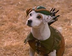 If you know who this dog is, you remember the 90s. Wishbone <3--yes, wishbone is a person!