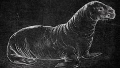 ancient pinniped
