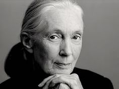 JANE GOODALL -  primatologist, ethologist, anthropologist and the world's foremost expert on chimpanzees