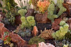 succulent coral garden | 4893cc5b9647139e92f00677b20c7a0b.jpg