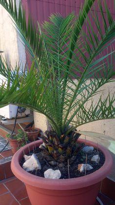 Plantas y Flores http://youtu.be/gU662dRCOno