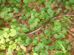 Cobra no  jardim