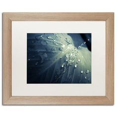 Trademark Art Rain Dropping on Canna Leaf Framed Photographic Print Size: 1