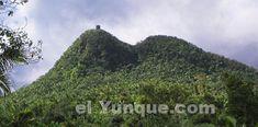 Mt.Britton tower on a peak in the El Yunque rainforest