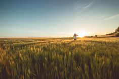 Wallpaper Wheat k k wallpaper field sunset clouds hills Stock Photo Sites, Free Stock Photos, Free Photos, Beautiful Landscape Wallpaper, Beautiful Landscapes, Provence, Sun Stock, Towards The Sun, Free High Resolution Photos