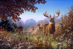 Dream Bucks III - The Midwest Monster