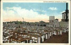 Gainesville TX Cotton Compress c1920 Old Postcard   eBay