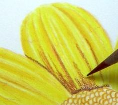 Colored Pencil: Painting Flowers