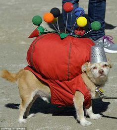 Dog in halloween costume.