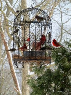 What a really neat idea...use a decorative bird cage as a bird feeding station.