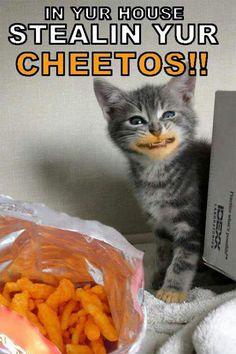 Chetos cat