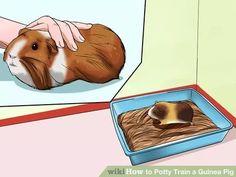 Image titled Potty Train a Guinea Pig Step 6