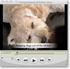 Teaching your puppy is focused on building your relationship with your canine and setting up boundaries. Be firm yet consistent and you'll see awesome results in your dog training adventures. Online Dog Training, Training Your Puppy, Dog Training Tips, Dog Whisperer, Puppy Day, Aggressive Dog, Free Dogs, Dog Costumes, Dog Behavior