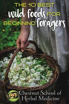 The 10 Best Wild Foods for Beginning Foragers // Chestnut School of Herbal Medicine  #foraging #wildfood #wildfoods #wildcrafting #herbalife #rose #burdock #stingingnettle #dandelion #chickweed #violet #blackberry #blackwalnut #chestnut