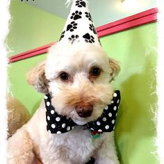 Happy Birthday Crosby who celebrated April Happy 7th Birthday, Charity, Celebrities, Boys, Instagram Posts, Animals, Baby Boys, Animais, Children