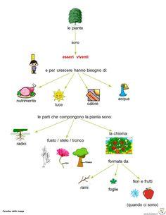 La pianta e le sue parti Science, Education, School, Geography, Alphabet, Autism, Tecnologia, Schools, Science Comics