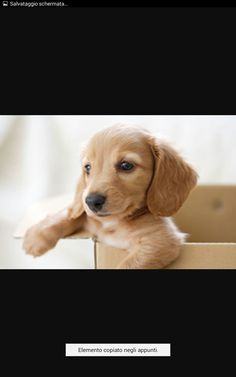 Best Dogs, Cute Dogs, Dog Lovers, Cute Animals, Bunny, Puppies, Pets, Dachshunds, Sausage Dogs
