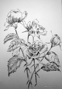 LAURA CLIMENT.  Grey roses, ink, grphite. Roses Only, Grey Roses, Ink, Floral, Florals, Flower, Flowers, Ink Art
