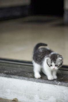 Ideas For Baby Cute Baby Cats And Kittens If you are looking for Baby cute baby cats and kittens you've come to the right place. We have collect images about Baby cute baby cats and kittens in. Kittens And Puppies, Cute Cats And Kittens, Baby Cats, Kittens Cutest, Baby Kitty, Fluffy Kittens, Ragdoll Kittens, Sleepy Kitty, Bengal Cats