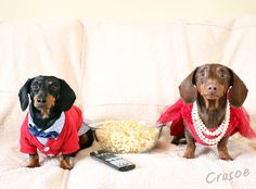 dogs watching a movie with popcorn