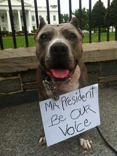 END DISCRIMINATION enshrined in law (BSL) and DOG FIGHTING NOW!!!