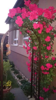 Ružová brána