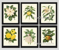 BOTANICAL Print SET of 6 Art Prints 8x10 Wendel Beautiful White Large Magnolia Yellow Roses Peach Apple Fruit Garden Antique Illustration