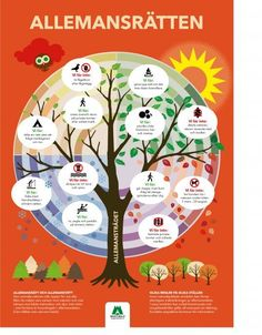 Allemansrätten poster (see link for pdf) Hate School, Too Cool For School, Learn Swedish, School Posters, Toddler Books, Preschool Science, Nature Study, Science And Nature, Primary School