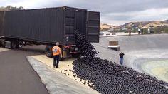 96 Million Plastic Balls Protect the LA Reservoir