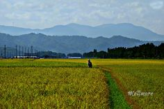 Harvesting by MeAmore5, via Flickr