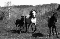 Free to roam on the Blackfeet Reservation in Montana