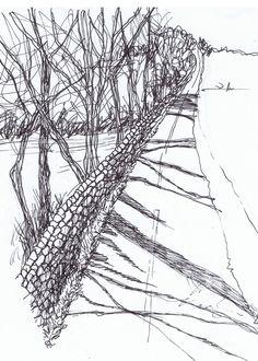 Tree Shadows - ink