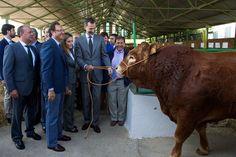 King Felipe VI of Spain and Queen Letizia of Spain attend International Cattle Fair on October 2, 2014 in Zafra, Spain.